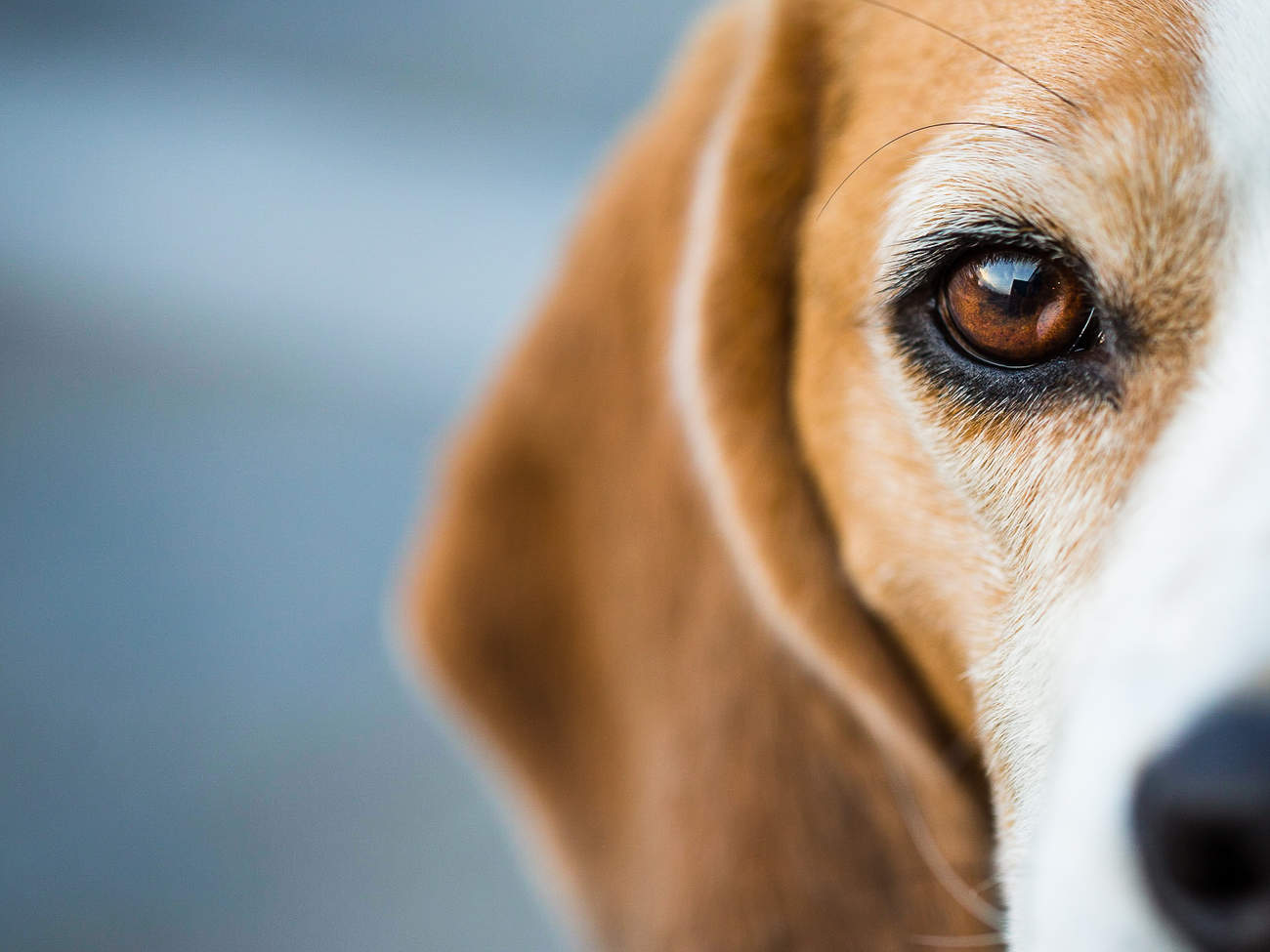 5-dogs-died-eating-skin-cancer-cream