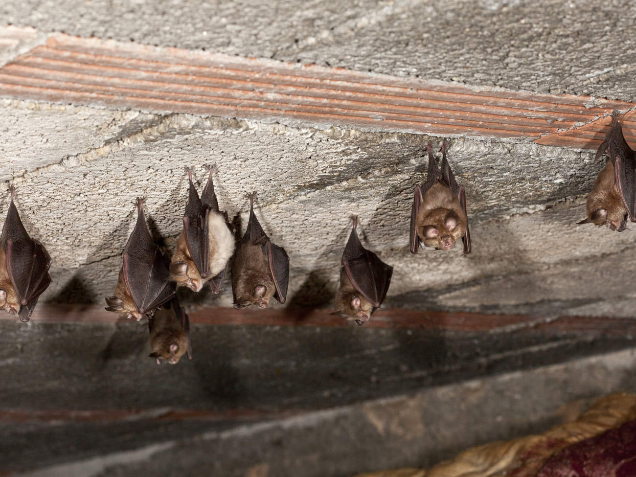 bat-indoors-cuties