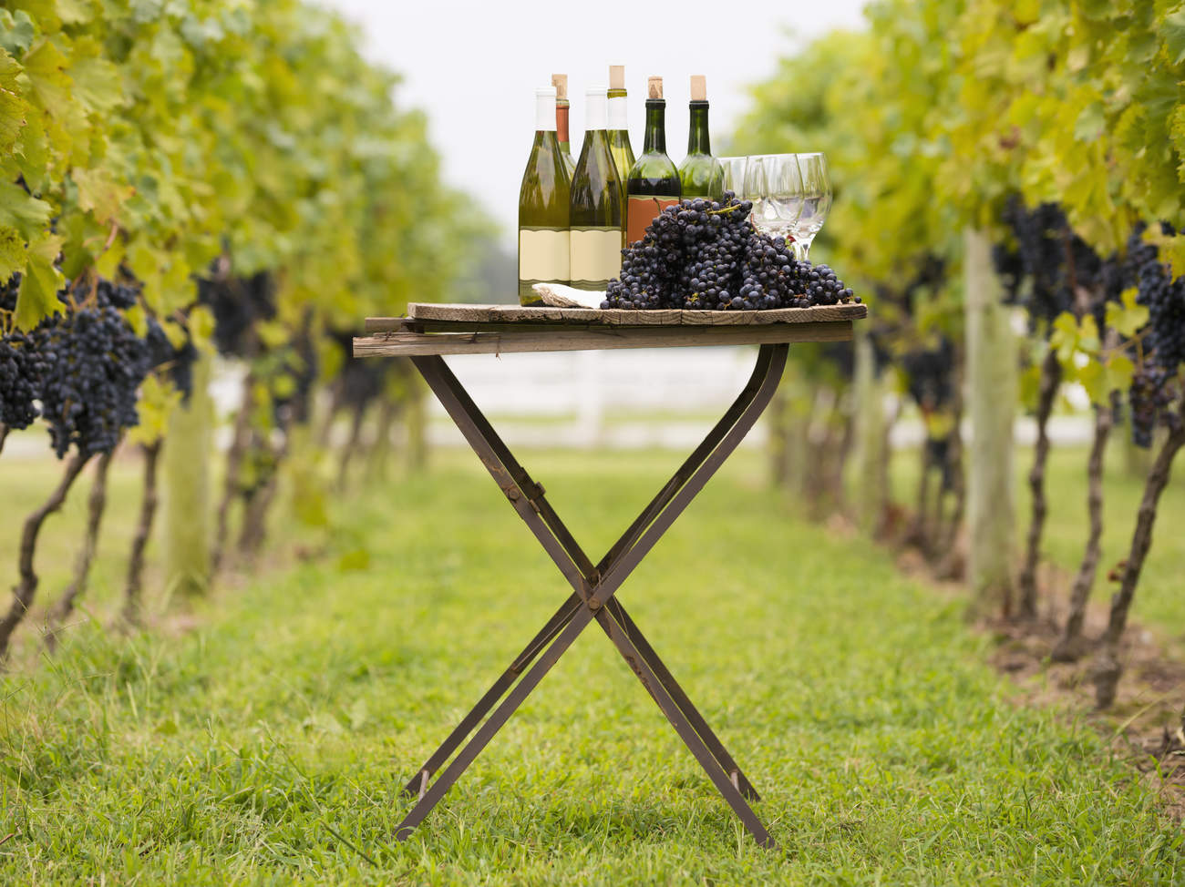 healthy-wine-grapes-alcohol