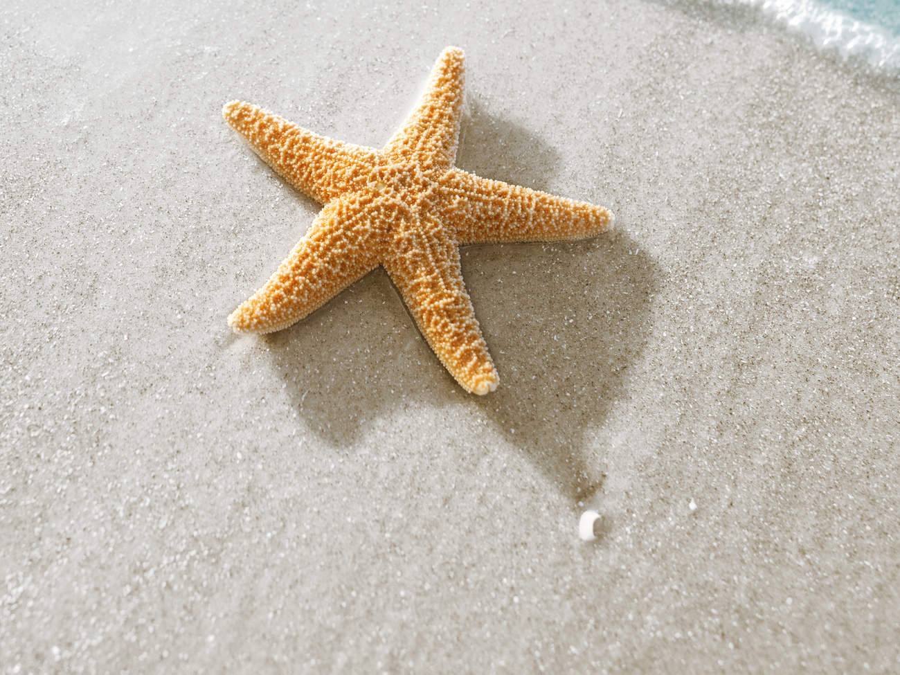 is-starfishing-bad-beach-ocean