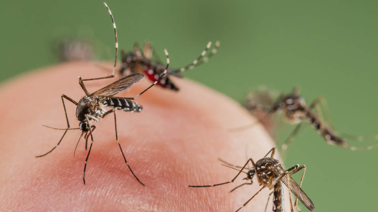 Dengue is a leading cause of death in the tropics