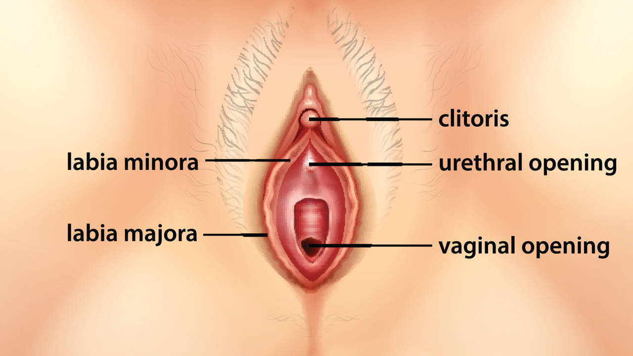 05-internal-clitoris-g-spot