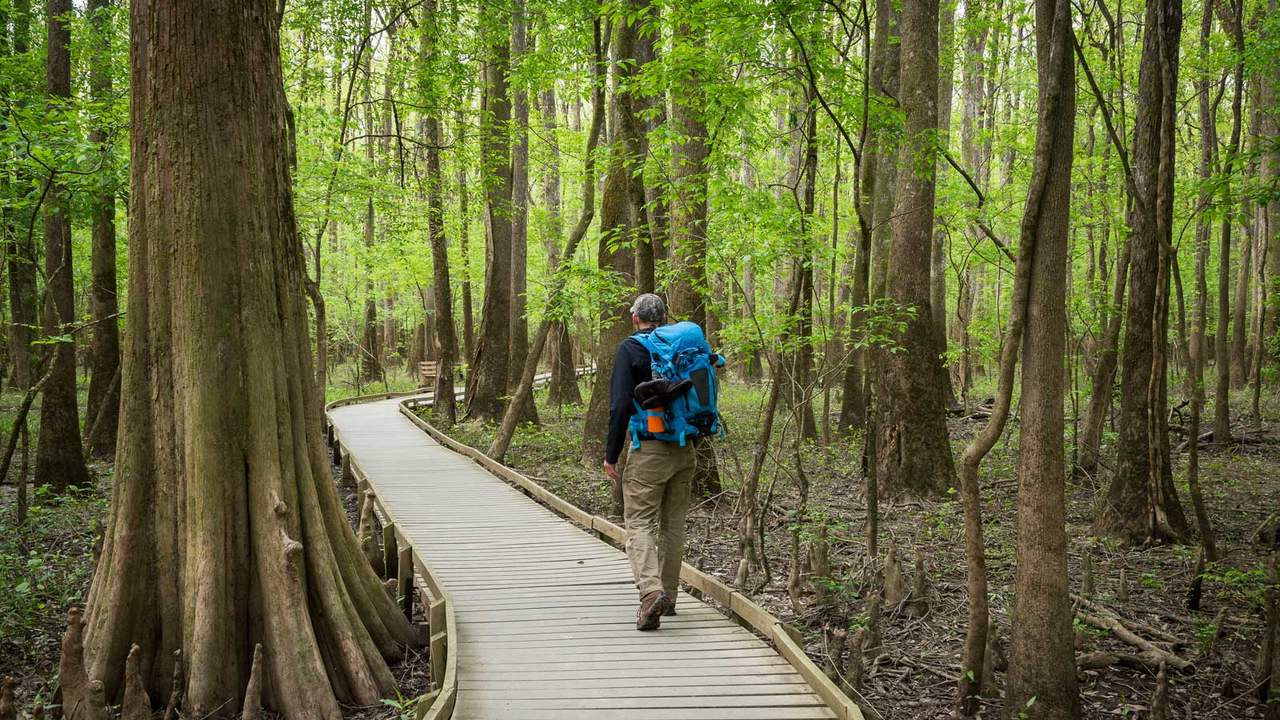 In Congaree National Park, visitors will find the largest expanse of intact old growth bottomland hardwood forest that still remains within the southeastern U.S.