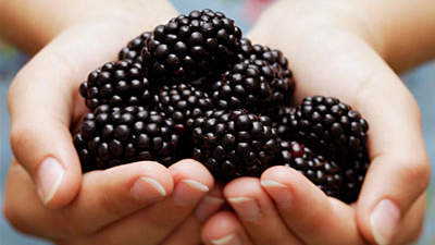 hands-blackberries-diabetes