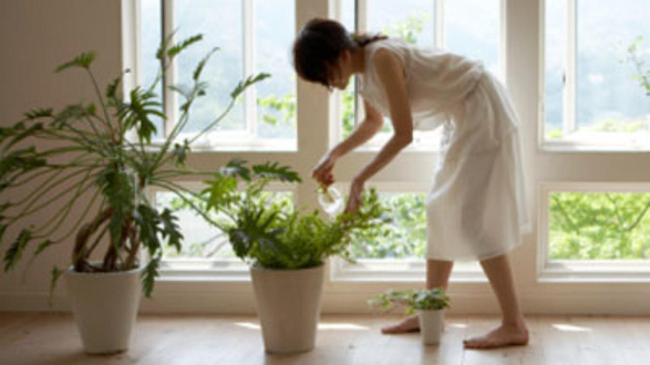 Healthiest Plants for Your Home