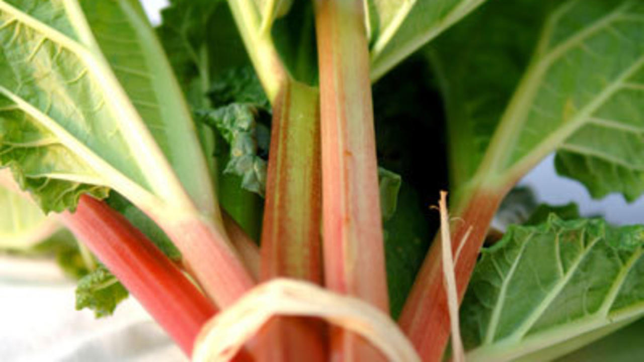 Rhubarb and bok choy for bones
