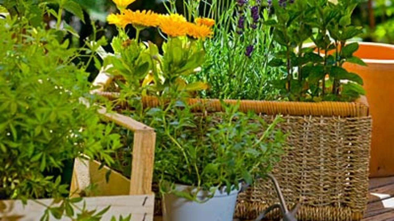 8 Must-Have Gardening Tools