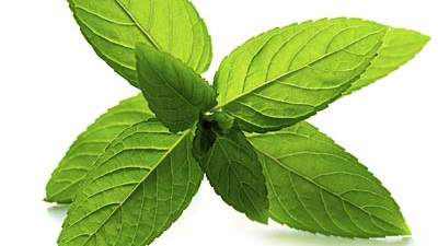 Peppermint to feel more alert