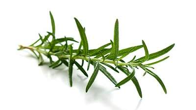 Rosemary for better focus at work