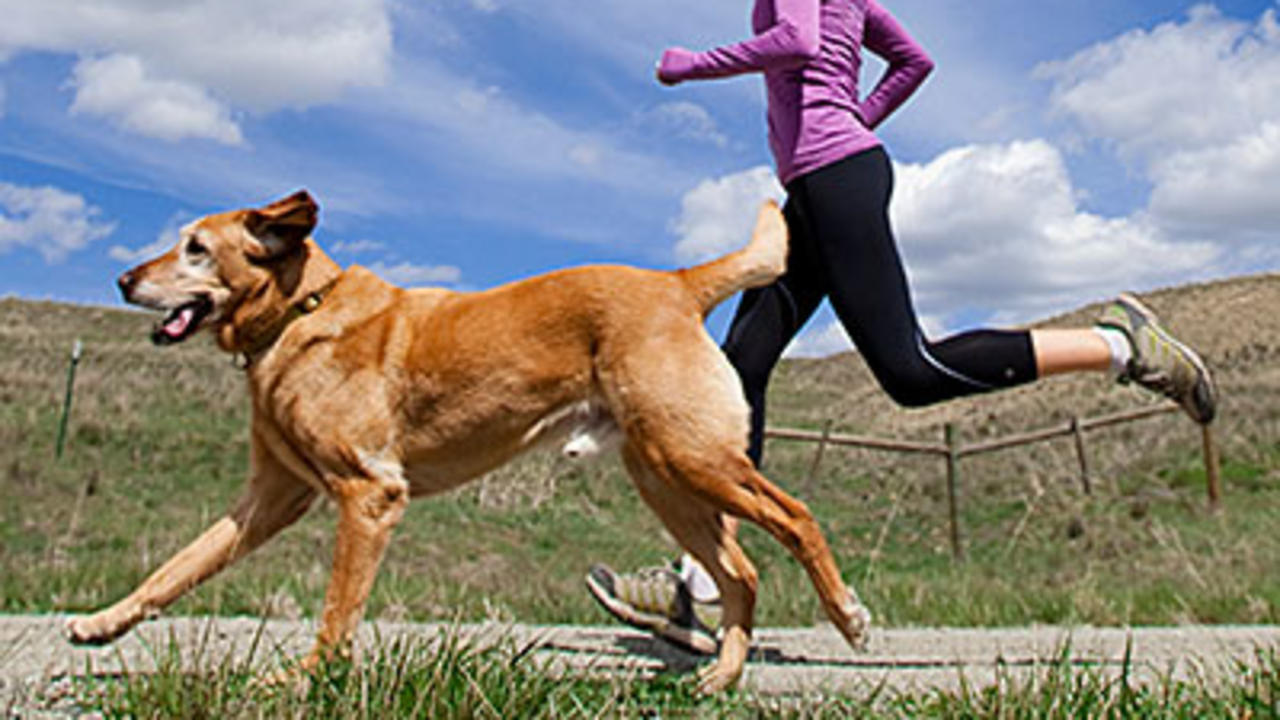 Exercising with Your Dog in Winter