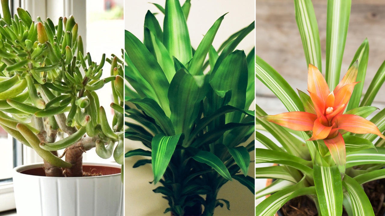 Air purifying indoor plants health - Healthiest houseplants fresh air delight ...