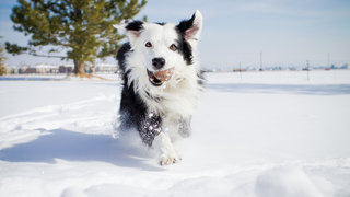 winterize-pup-snow-dog