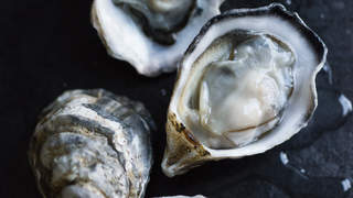 Raw oysters vibrio bacteria infection