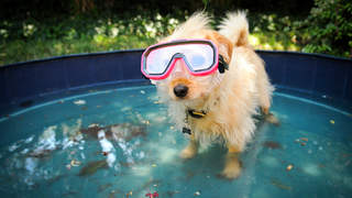dog-pool-goggles