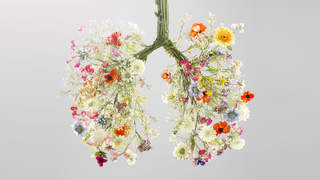 01-respect-lungs-healthy