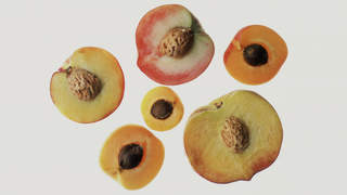 vagina-peach-yeast-infection-std