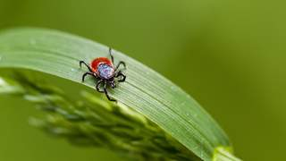deer-tick-lyme-disease