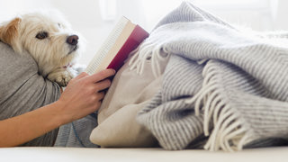 dog-reading-bed-pets