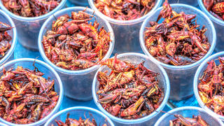 fried-grasshopper-cups-insect-food