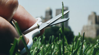 perfectionist-ocd-grass-scissors