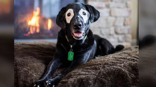 thedogist-white-eyed-rowdy